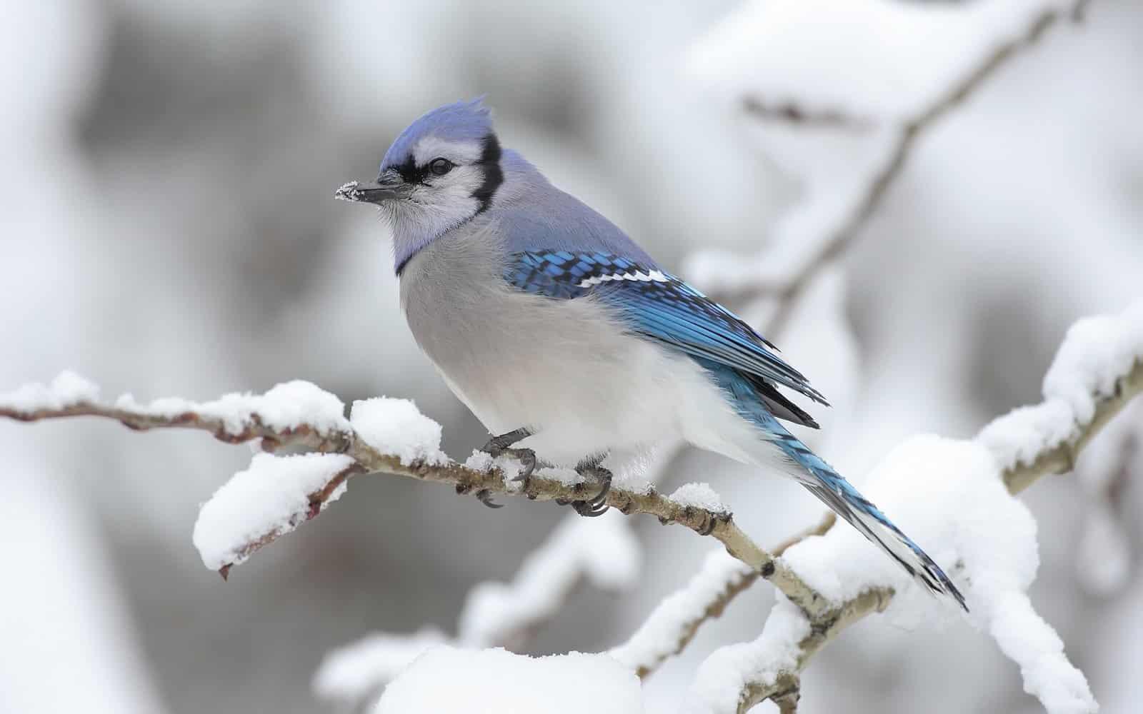Vinterkort Forsøgsdyrenes Værn