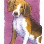 5 kort, hund med kant