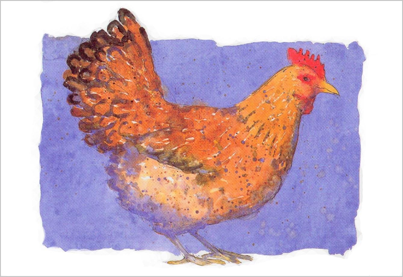 5 kort høne med kant  Forsøgsdyrenes Værn