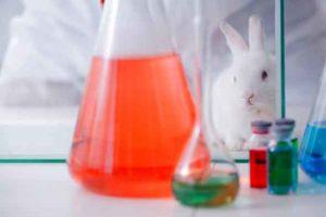 Forsøgsdyrenes-Værn-reducerer-giftighedsforsøg22
