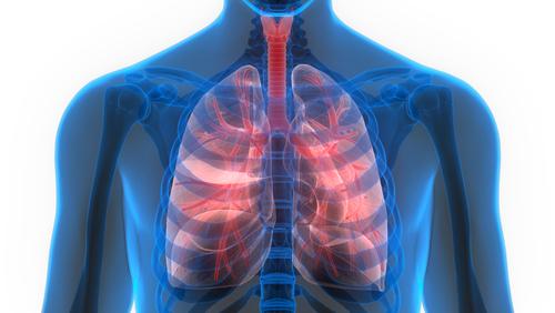 forsøgsdyrenes værn lungevejssygdomme dyrefri